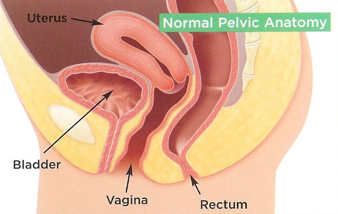 Pelvic Floor Muscle Rehabilitation — MacArthur Medical Center